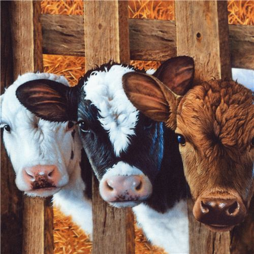 black Robert Kaufman fabric animal cow pig Down on the Farm Digital