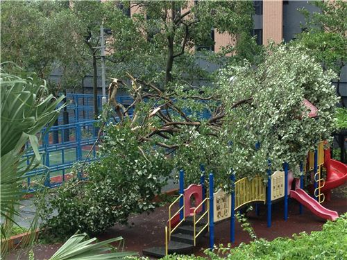 This big tree crashed on a children playground