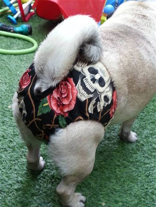 Concepcion Tejeda from Tenerife made cute pants for her dog with our Alexander Henry skull fabric