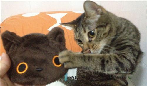 Her cat loves her Kutusita Nyanko wallet